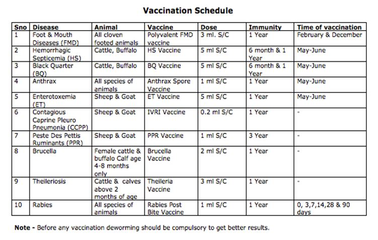 vaccination schedule for goats
