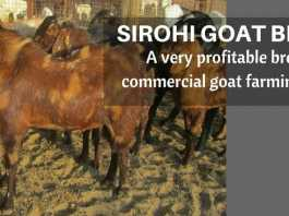 7 Steps to Start Profitable Goat Farming Business in India | Expert