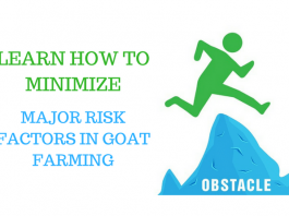 7 Steps to Start Profitable Goat Farming Business in India