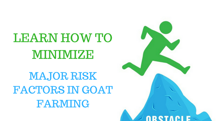 risk factor in goat farming