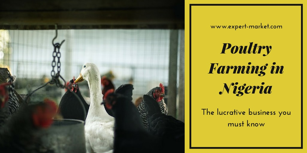 poultry farming lucrative business in nigeria