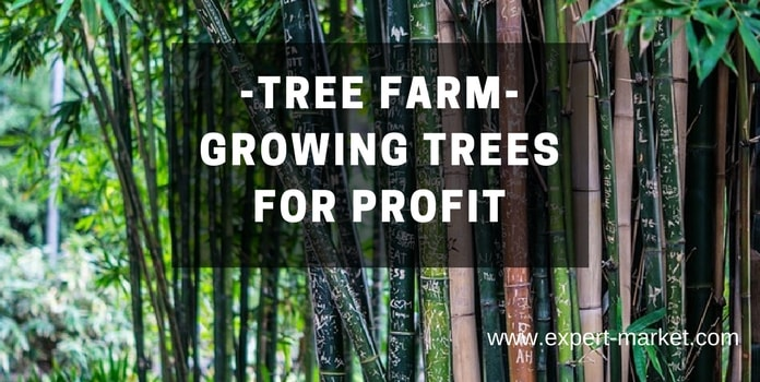 Top 10 Most Profitable Trees To Grow In Your Tree Farm In
