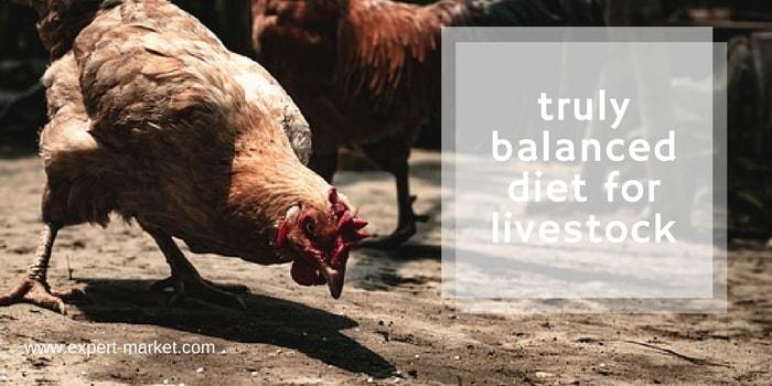 balanced diet for livestock