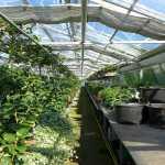 plant nursery in Florida